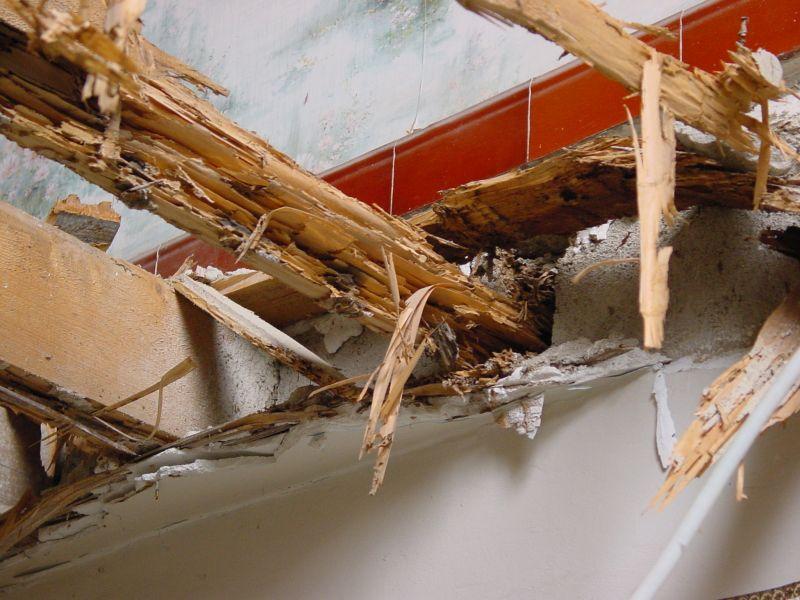 tout savoir pour radiquer les termites biscarrosse 40 limination des termites arcachon. Black Bedroom Furniture Sets. Home Design Ideas