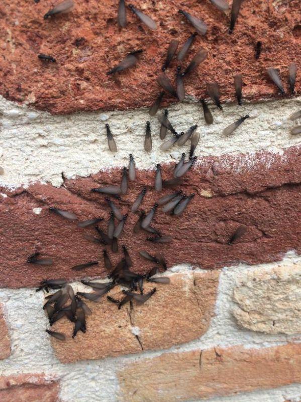 traitement de termites mont de marsan dans les landes 40 d sinsectisation termites arcachon. Black Bedroom Furniture Sets. Home Design Ideas