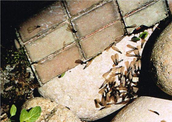 se d barrasser de la mousse sur le toit d 39 une maison bordeaux termites gironde. Black Bedroom Furniture Sets. Home Design Ideas